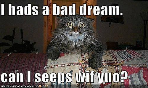 Why Do I Keep Having Bad Dreams The Litter Box
